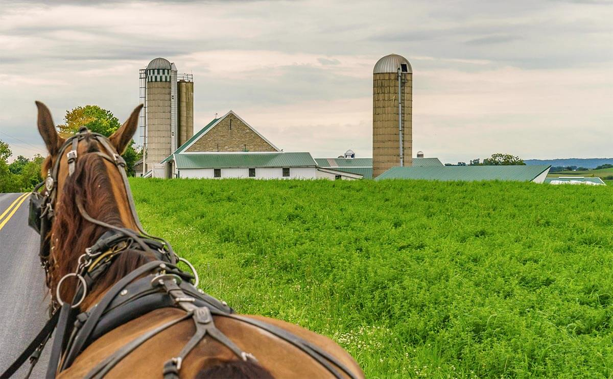 Amish horse pulling a buggy on a country road.